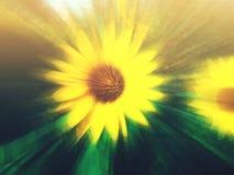 Marzycielski słonecznik zdjęcie stock