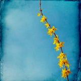 Marzycielski springflowers tło obrazy stock