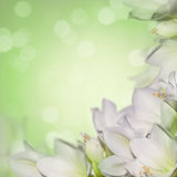 Marzycielski springflowers tło fotografia stock