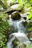 marzycielski strumień Zdjęcia Royalty Free