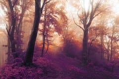 Marzycielskiej bajki mgłowy las zdjęcia stock