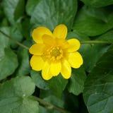 Masło kolor żółty Obrazy Stock