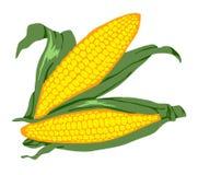 Maïs 2 Photographie stock