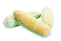 Maïs cru dans les cosses Images stock