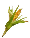 Maïs d'isolement sur le blanc Images stock