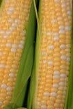Maïs frais Photos stock