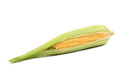 Maïs frais d'épi de maïs sur le plan rapproché blanc Image stock