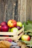 Maçãs orgânicas saudáveis Fotografia de Stock Royalty Free