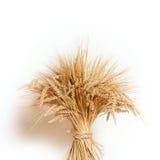 Maïs sur le fond blanc Images stock