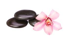 Masażu bazalta kamienie i storczykowy kwiat odizolowywający na bielu Obraz Royalty Free