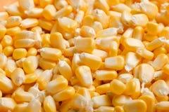 Masa żółte kukurydzane adra Obrazy Stock