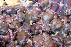 Masa bullfrog i sprzedawali dla jedzenia Fotografia Royalty Free