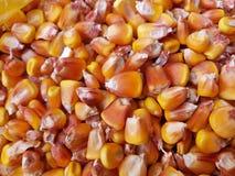 Masa kukurydzana tekstura Zdjęcie Stock
