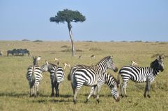Masaai Royalty Free Stock Photography