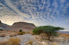 Masada Imagem de Stock