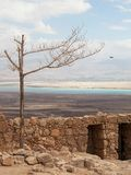 Masada and the Dead Sea Royalty Free Stock Photos