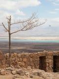 Masada und das Tote Meer lizenzfreie stockfotos