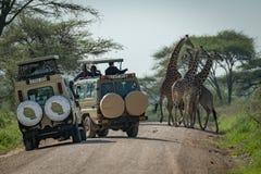 Masai żyrafa widzieć turystami w dżipach fotografia stock