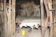 masai σπιτιών παραδοσιακό Στοκ Φωτογραφία