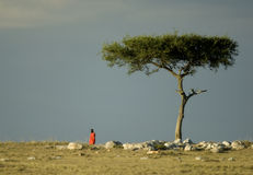 masai Кении mara Стоковые Изображения