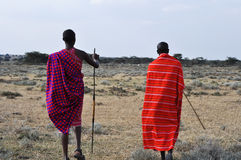 Masai. Couple walking Masai on the African savanna Royalty Free Stock Photography