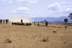 Masai herd Stock Images