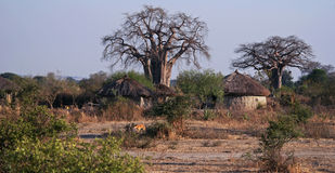 Masai Huts Stock Image