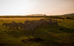 Masai Mara Photo stock