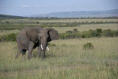 Masai Mara lizenzfreies stockbild