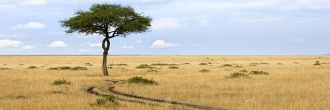Masai mara imagens de stock royalty free