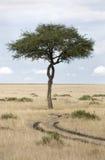 Masai Mara Lizenzfreies Stockfoto