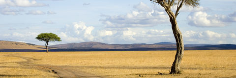 Masai mara Royalty Free Stock Image