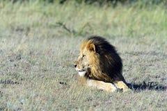 Masai Mara Fotografía de archivo