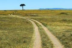 masai mara Стоковые Фотографии RF