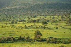 Masai Mara Fotografia Stock Libera da Diritti