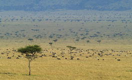 Masai-Mara Stock Photos