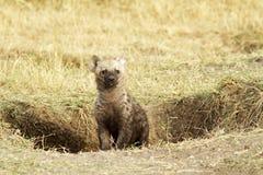 Masai Mara Baby Hyena Fotografia Stock Libera da Diritti