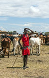Masai Mara con ganado Foto de archivo