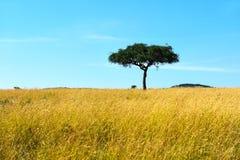 Masai Mara do parque imagem de stock