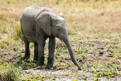 Masai Mara Elephant Fotografia Stock Libera da Diritti