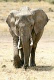 Masai Mara Elephant Lizenzfreies Stockbild