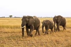 Masai Mara Elephants Stock Photo
