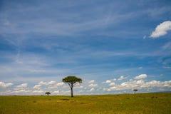 Masai Mara Game Reserve stockfotografie