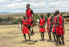 Masai Mara jumping Royalty Free Stock Image