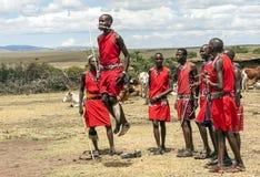 Masai Mara jumping royalty free stock image