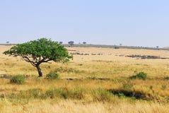 Masai Mara, Kenia Lizenzfreie Stockbilder