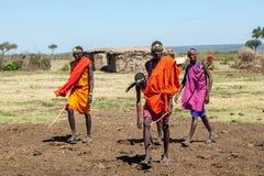 MASAI MARA, KENYA, AFRIKA FEBRUARI 12 Masaimän, granskning Arkivbilder