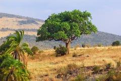 Masai Mara, Kenya Stock Images