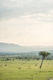 Masai Mara Landscape Stock Afbeeldingen