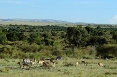 Masai Mara Landscape Kenya Immagine Stock Libera da Diritti